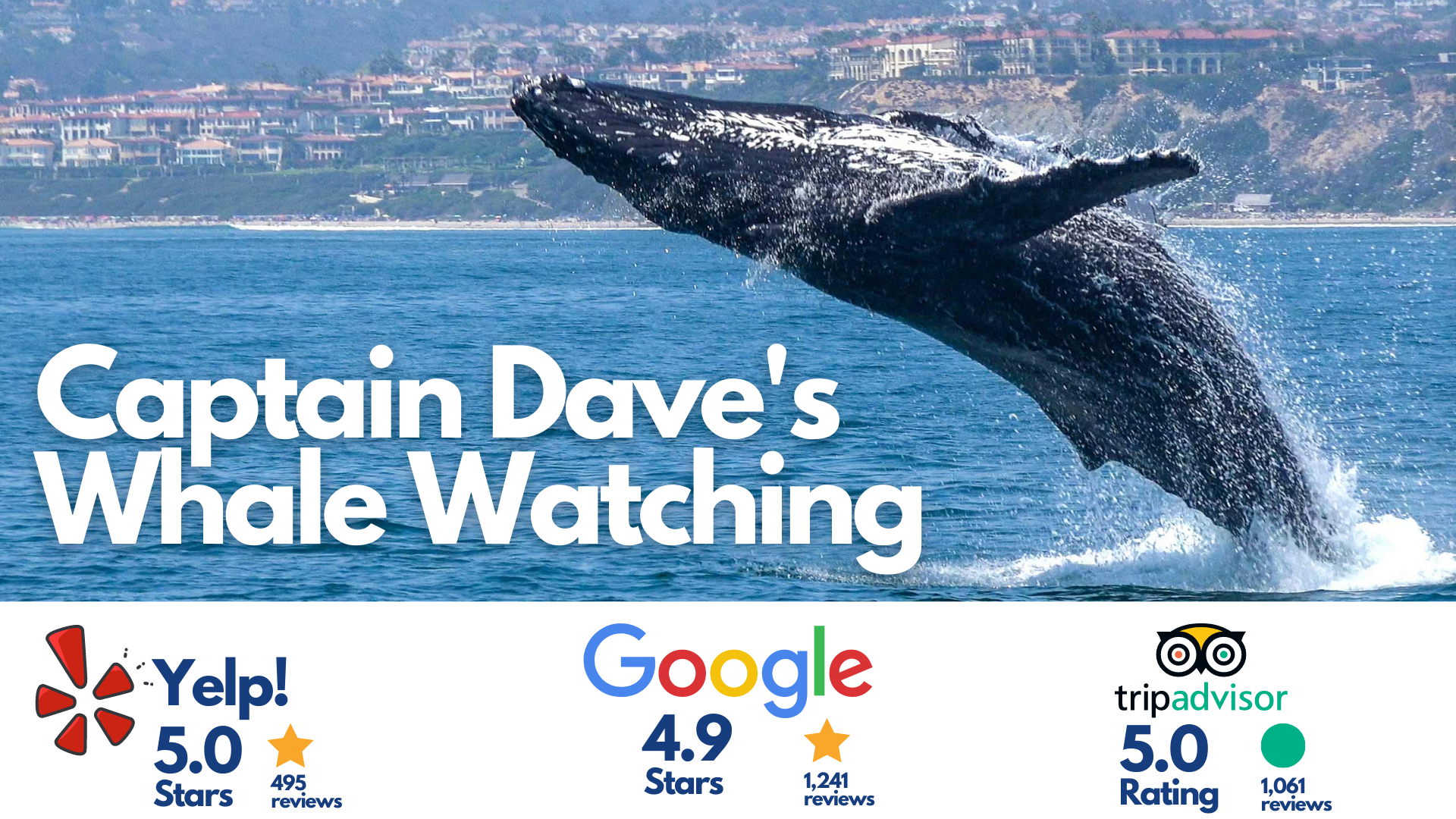captain dave's whale watching, dana piont, california, picture of a whale jumping out of water in the pacific ocean doing a back flip near the dana point harbor